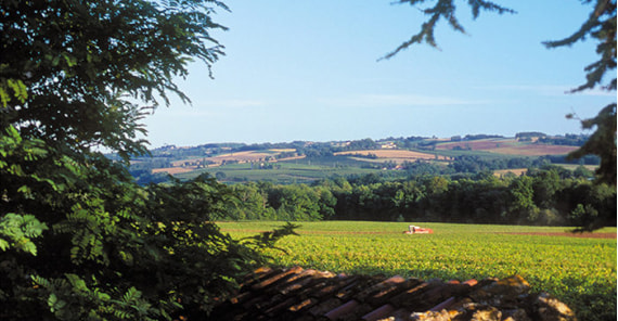 Wine Region of the Year: Southwest France